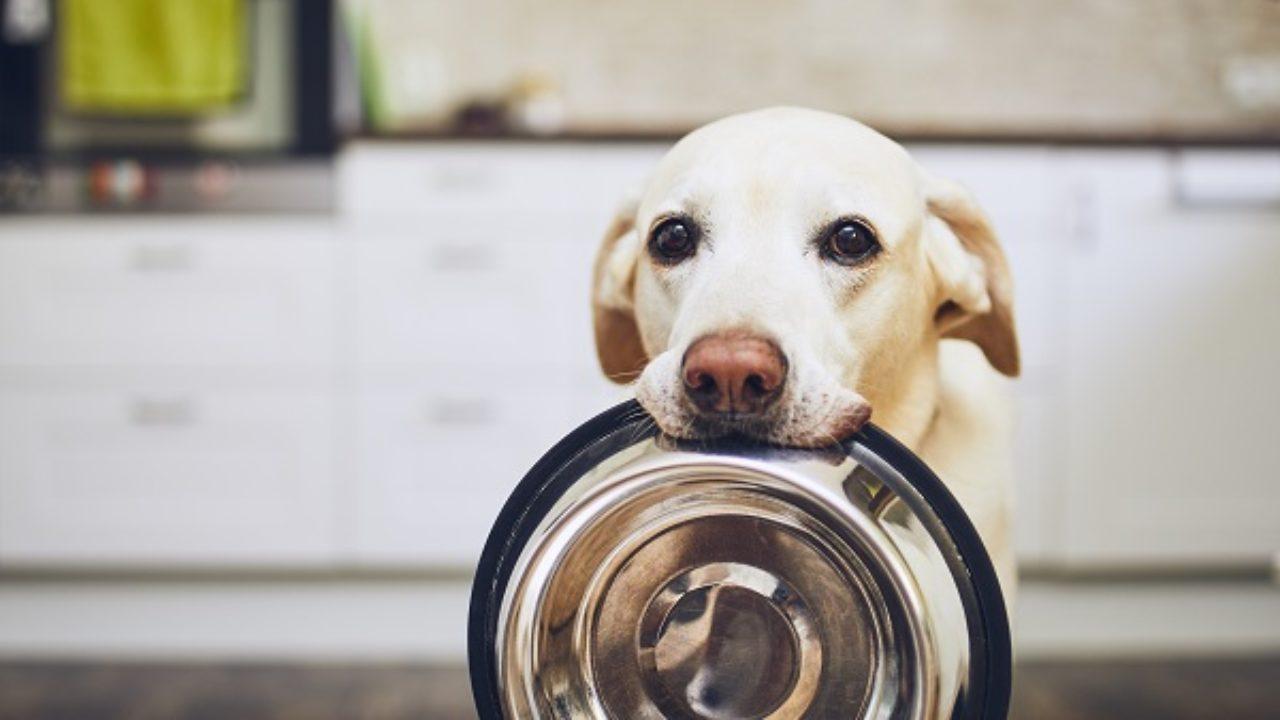 Coronavírus: Campanha arrecada ração pra cães e gatos, Hoje News