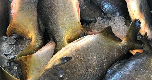 Feira do peixe é confirmada pela Secretaria da Agricultura