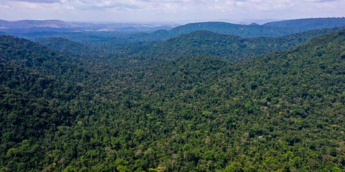 unesco-e-amazonas-lancam-plano-de-acao-para-amazonia-central