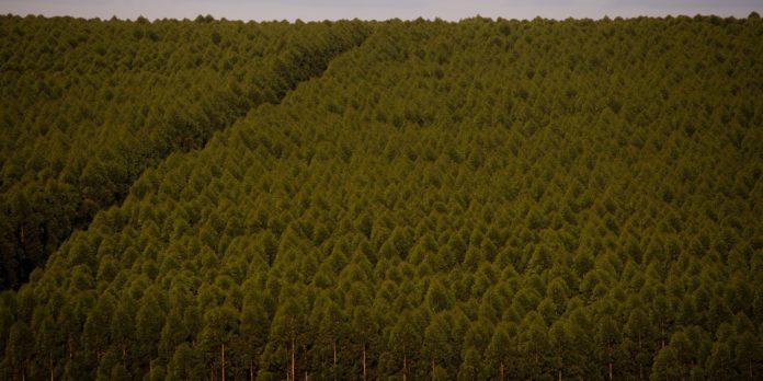florestas-plantadas-no-brasil-somam-9,3-milhoes-de-hectares-em-2020