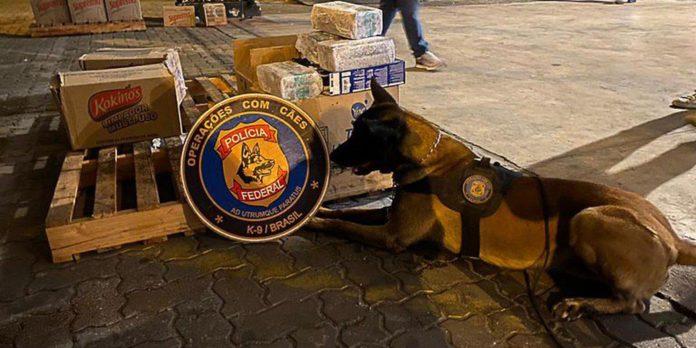 policia-federal-apreende-5-toneladas-de-cocaina-no-porto-do-rio