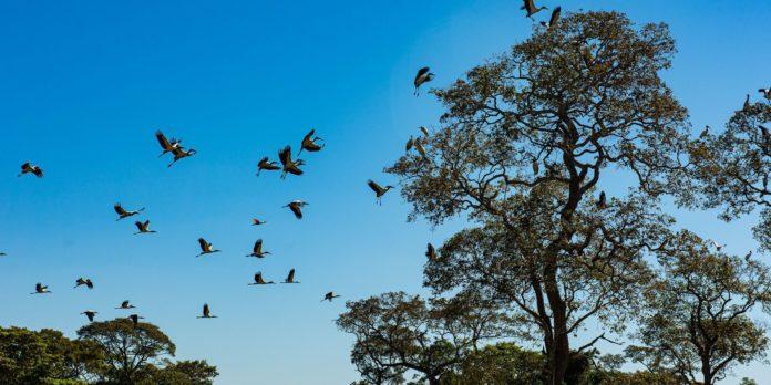 seca-historica-no-pantanal-provoca-maior-vazante-em-121-anos